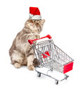 Cat In A Christmas Cap With A Cart Royalty Free Stock Image - 27156706