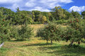 Apple Orchard And Pumkin Patch Stock Images - 27166314