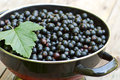 Fresh Blackcurrant In Bowl Stock Images - 27170754