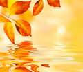 Autumn Leaves Background Royalty Free Stock Photo - 27188935