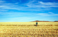 Man In Wheat Field Stock Photography - 27200522