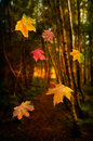 Falling Leaves Stock Image - 27224051
