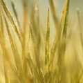 Blurred Autumn Frozen Grass Royalty Free Stock Image - 27234936