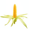 Corn On The Cob Royalty Free Stock Photo - 27238875