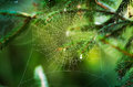 Spider Web Stock Photography - 27256462