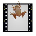 Blank Film Strip Frame And Tree Frog Isolated Stock Photos - 27272403