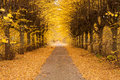 Golden Alley Royalty Free Stock Image - 27274126