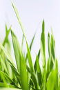 Blades Of A Grass Stock Images - 27294164