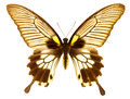 Great Mormon Butterfly Stock Photos - 27295783