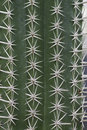 Cactus Thorn Stock Images - 27301694
