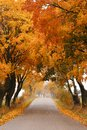 Autumn Maple Road. Royalty Free Stock Photography - 27369107