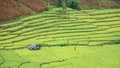 Aerial View Of House At Rice Field Terraces Stock Images - 27383414