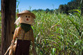 Scarecrow By A Corn Maze Stock Photography - 27389672
