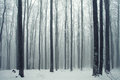Winter Forest Scene Stock Image - 27393301