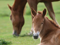 Foal Royalty Free Stock Photography - 27399287
