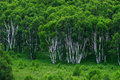Forests Stock Photography - 2740852