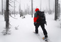 Man Goes Through The Woods On Snowshoes Stock Images - 27408084