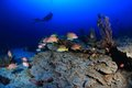 Coral Reef Royalty Free Stock Photos - 27410268