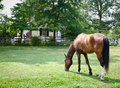 Brown Horse Grazing Stock Image - 27415881