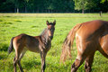 Foal And Mare Stock Photos - 27416063