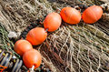 Bouys On Nets Royalty Free Stock Photography - 27419327