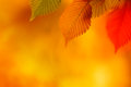 Colorful Autumn Leaves Royalty Free Stock Images - 27421889