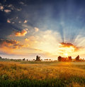 Dawn In A Field Royalty Free Stock Photo - 27421905