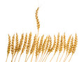 Number Of Ears Of Wheat Stock Photography - 27430972