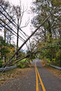 Utility Power Line And Pole Toppled By Fallen Tree Stock Images - 27431484