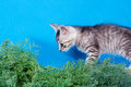 Gray Kitten In A Green Grass Royalty Free Stock Photo - 27437835