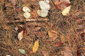 Forest Floor Stock Photography - 27446072