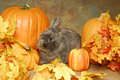 Bunny In The Pumkins Stock Images - 27457004