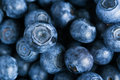 Blueberries Royalty Free Stock Photography - 2750197