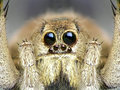 Spider Royalty Free Stock Images - 27502199