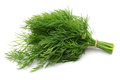 Dill Stock Image - 27502281