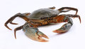 Crab Stock Images - 27505864