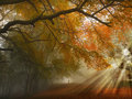 Autumn Forest Path Royalty Free Stock Photo - 27513295
