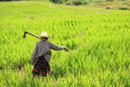 Woman Farming Holding Spade At Terraced Rice Field Royalty Free Stock Photos - 27514458