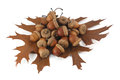 Acorns And Oak Leaves Stock Photos - 27515953