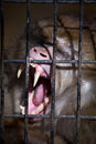 Monkey In Cage Stock Images - 27534764