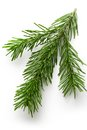 Twig Of Evergreen Fir Stock Photography - 27544492