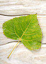 Poplar Leaf On A Wooden Background Stock Photo - 27548180