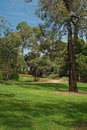 Trees And Bench In Park Royalty Free Stock Photography - 27562077