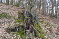 Stump Of A Tree In The Forest Stock Images - 27572654