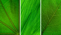 Green Leaf Collection Royalty Free Stock Photo - 27584595