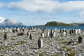 King Penguins In South Georgia Royalty Free Stock Photography - 27596137