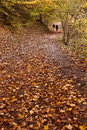 Autumn Woodland Path Stock Photo - 27617840