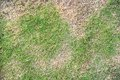 Dry Grass Stock Photography - 27623252