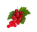 Red Currant Stock Images - 27634894