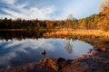 Early Morning Light On Forest Pond Stock Photography - 27641292